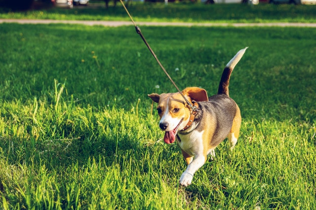 5 Best Dog Walkers in Christchurch