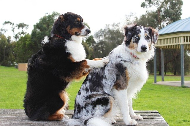 5 Best Doggy Day Care Centre in Auckland