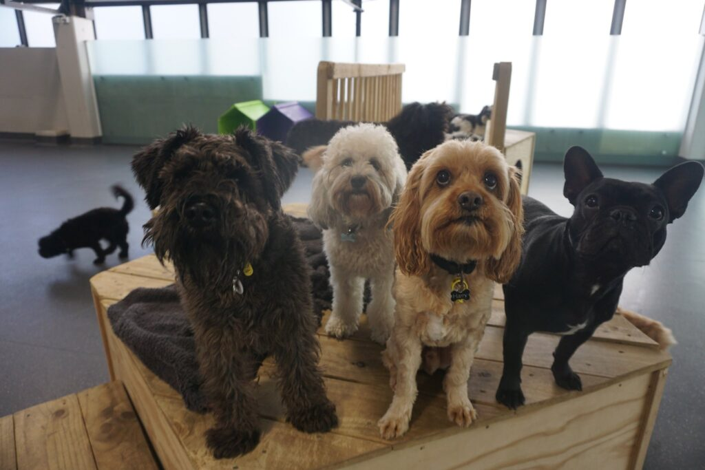 Central Bark Pet Hotel, Doggie Daycare & Groomers