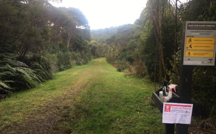 Ian Wells Track, Piha