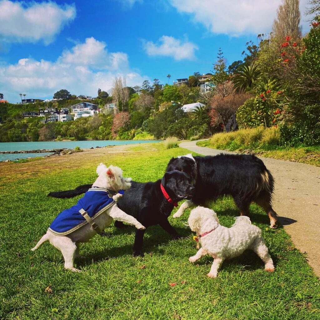 Wags 2 Whiskers Dog Walking & Pet Care