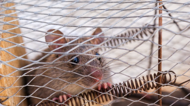 5 Best Exterminators in Wellington
