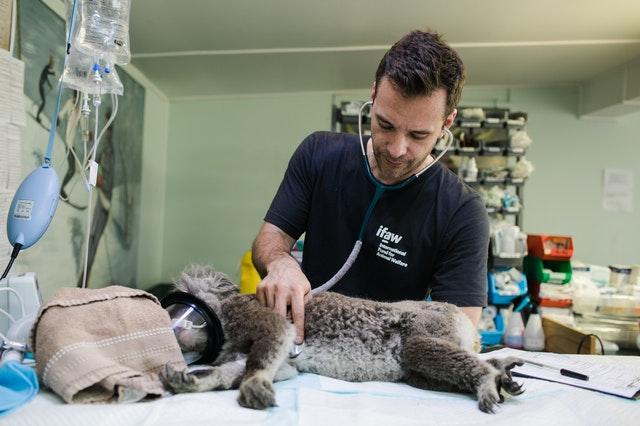 5 Best Veterinarians in Auckland