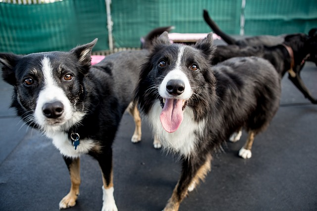 5 Best Doggy Day Care Centre in Hamilton