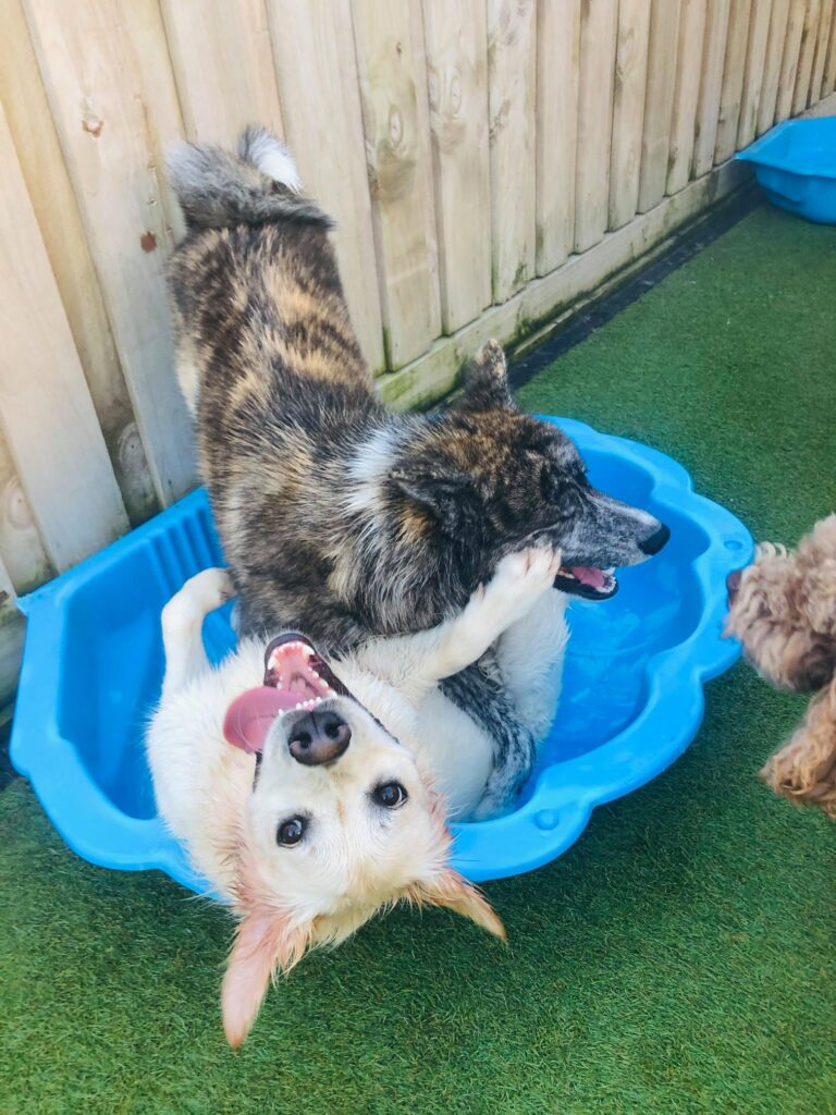 Paws Wellbeing Centre