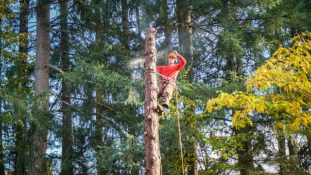 5 Best Tree Services in Christchurch