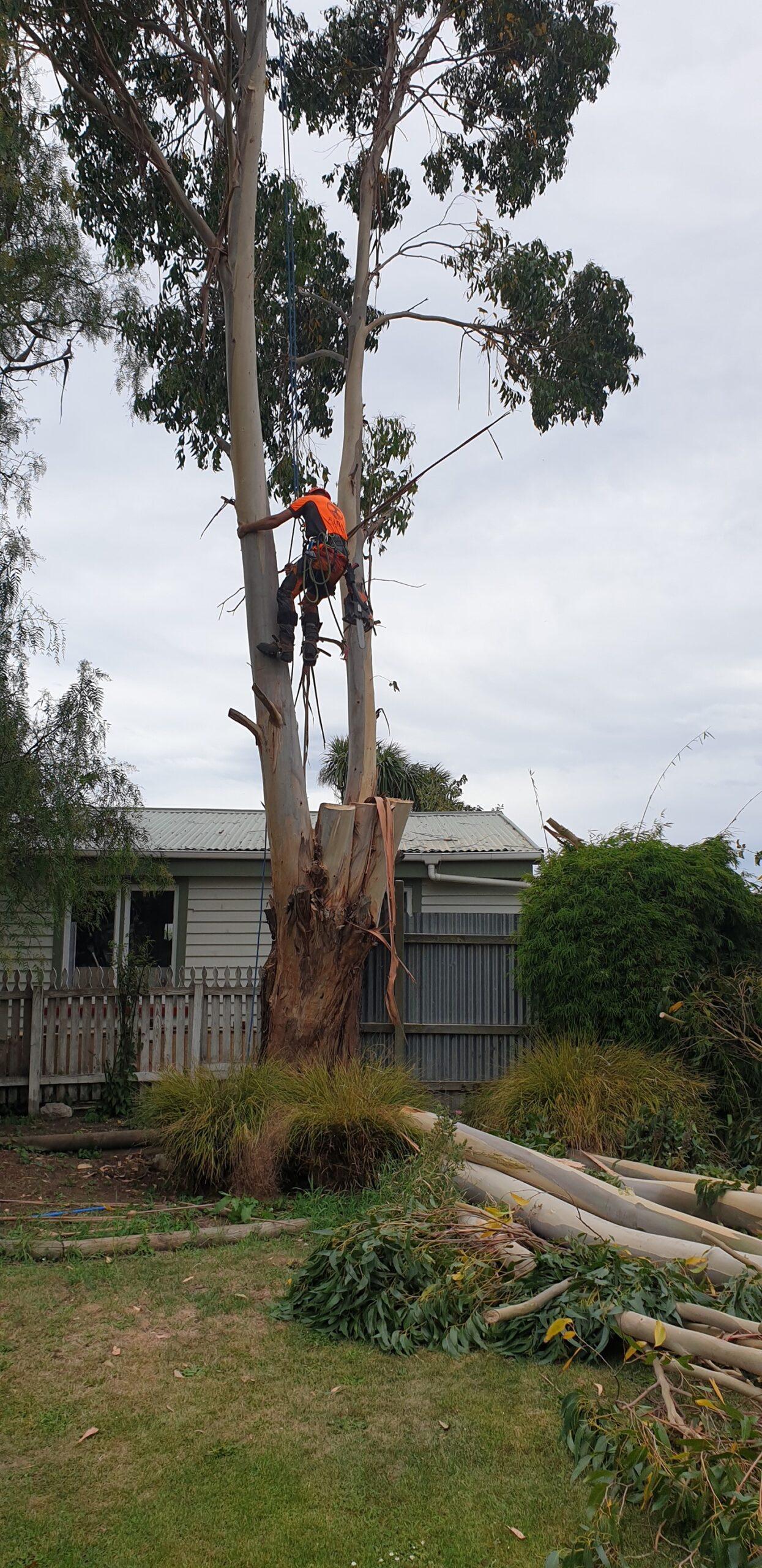 Alba Tree Services