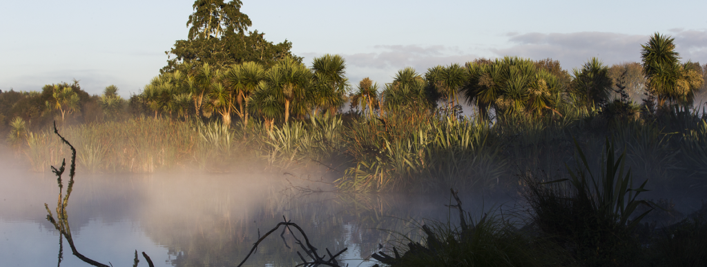 Waiwhakareke Natural Heritage Park