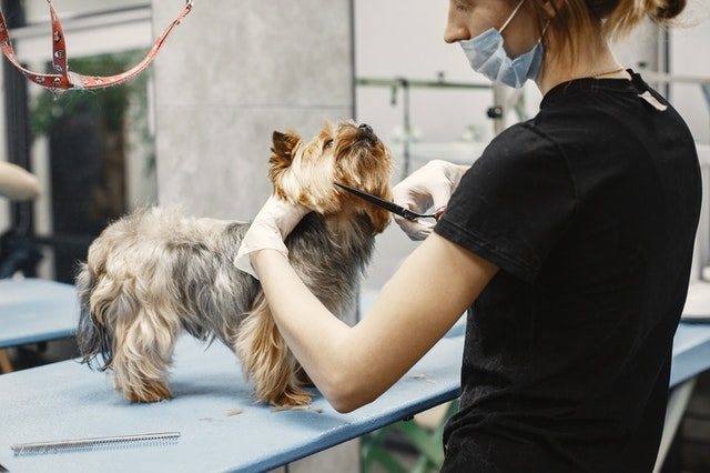 5 Best Dog Grooming in Wellington